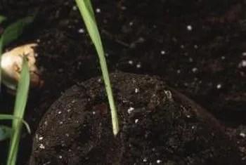 A crash course in Fertilizers