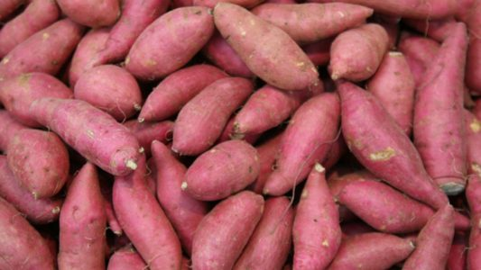 How to Cultivate Sweet Potato Commercially