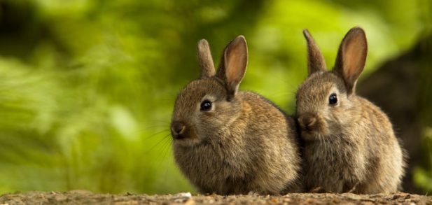 All You Need to Know About Rearing Rabbits