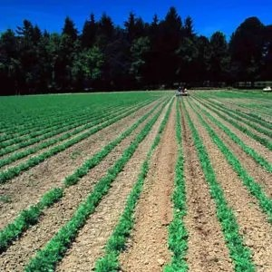 Soil Conservation: Essentials and Benefits of the Practice
