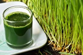 The Amazing Health Benefits Of The Wheat-Grass Juice!