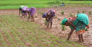 REASONS WHY SOME FARMERS FAIL