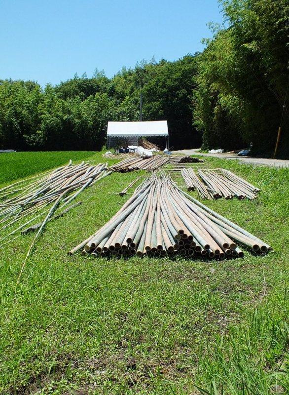 Big Bambu Preview - 2