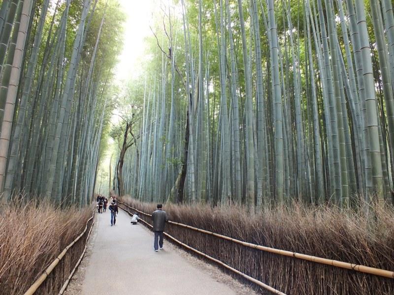 Bambous Arashiyama - 17