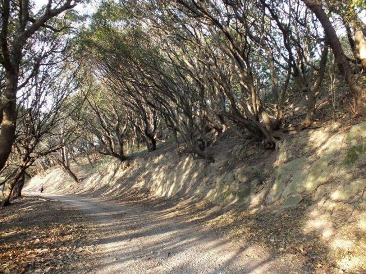 Pointe Nord de Yashima - 8