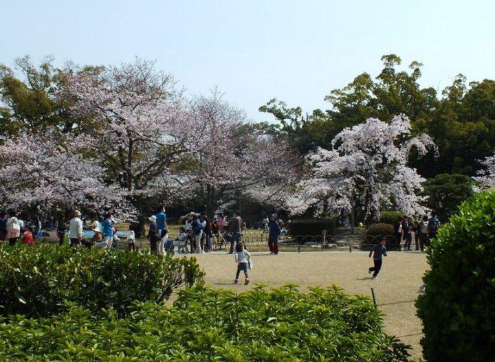 Cerisiers au Parc Ritsurin - 2015 - 1