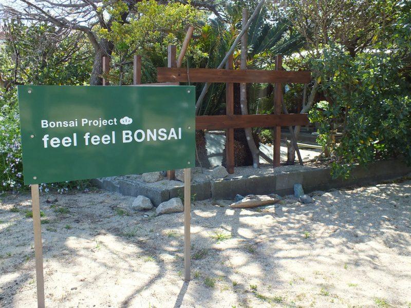 6 - Megijima - Feel Feel Bonsai