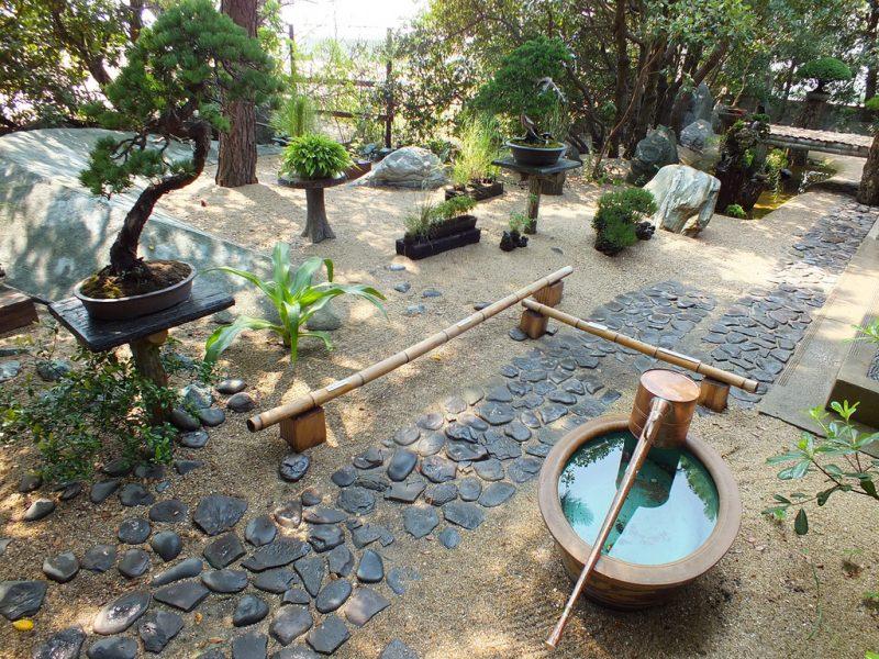 Feel Feel Bonsai en été