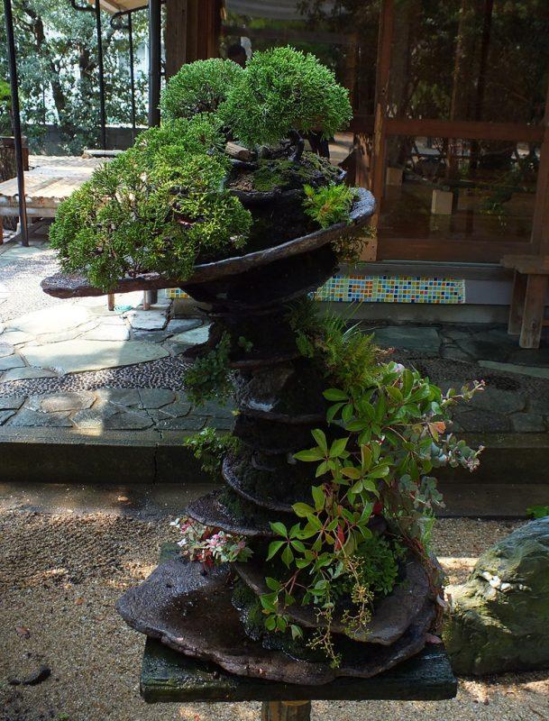 feel-feel-bonsai-en-ete-3