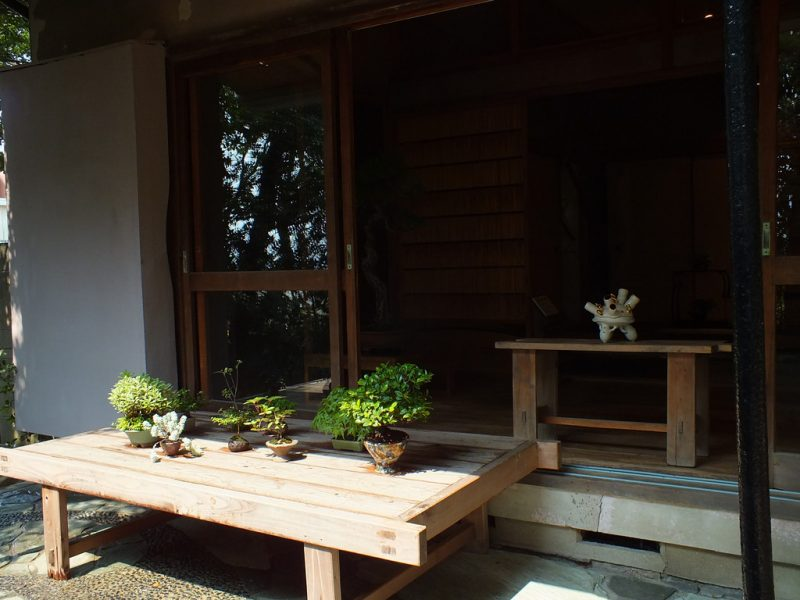 feel-feel-bonsai-en-ete-5