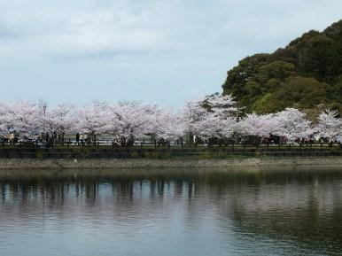 Cerisiers au Parc Kikaku 2017 - 3