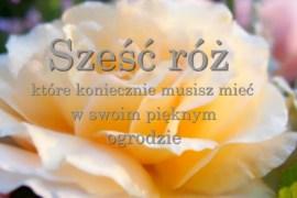 Sześć róż