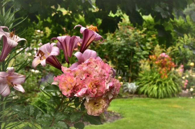 Parkowa, herbaciana róża Labdlust