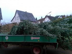 Baum auf Anhänger
