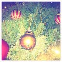 Christmas Tree Apathy