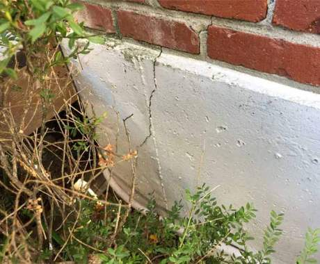 Can Trees Damage Your Foundation?