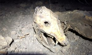 Crawl Spaces and Pests – How a Clean Crawl Space Keeps Away Rodents