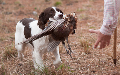 Field Training for Hunting Dogs