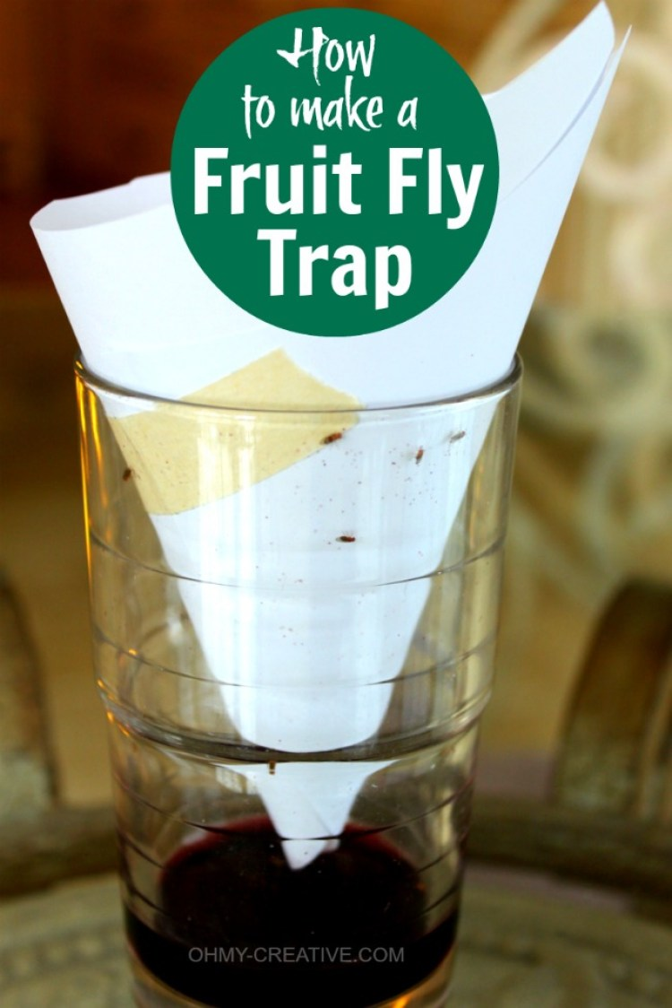 How to get rid of fruit flies? Try this quick and EASY way to make a Fruit Fly Trap...works so well! | OHMY-CREATIVE.COM