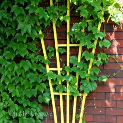 Photo Friday #5 Yellow Garden Trellis!