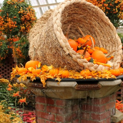 Fall Flower Garden Tour