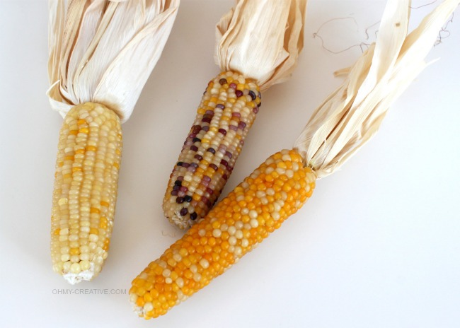 Mini Indian Corn | OHMY-CREATIVE.COM