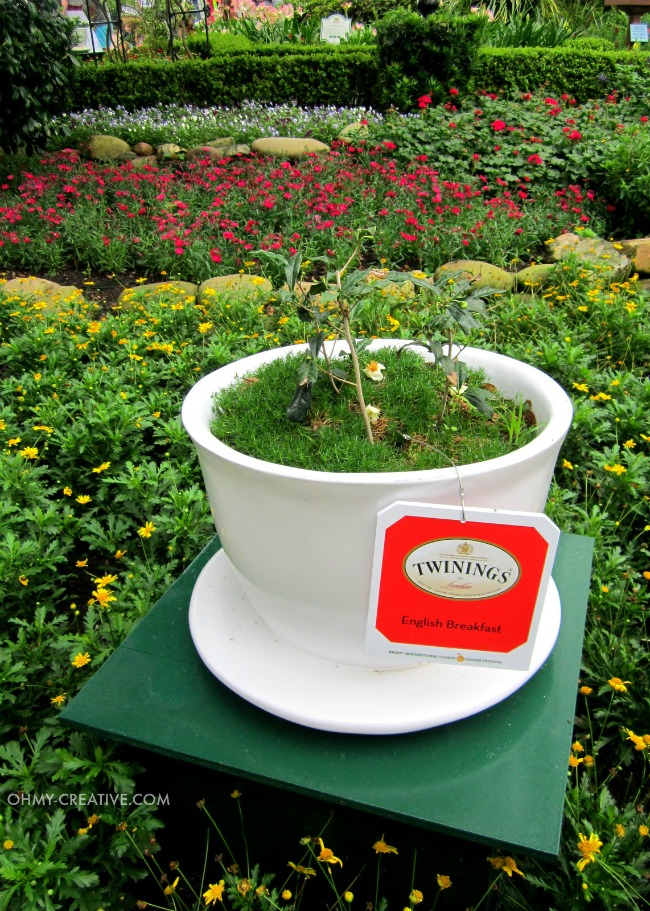 Teacup Planter Epcot International Flower and Garden Festival  |  OHMY-CREATIVE.COM