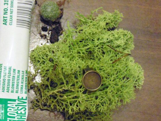 DIY living succulent ring