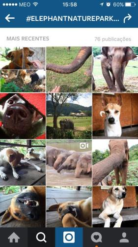 Elephant Nature Park Dogs