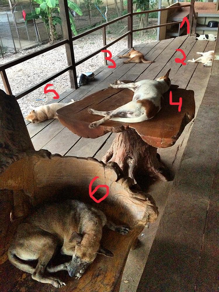 Cães dormindo no Elephant Nature Park