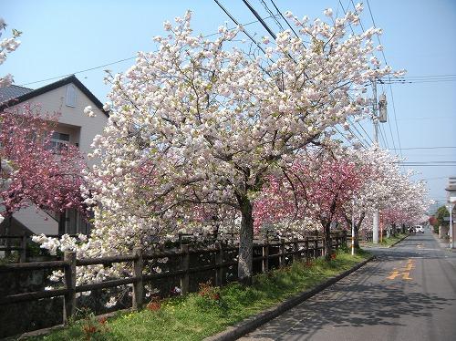 中野川12014.4.10