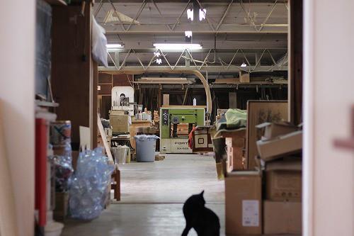 黒猫が住んでいます。