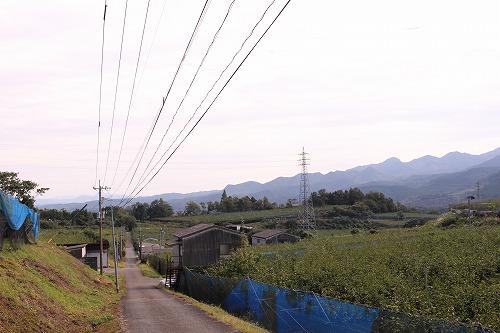 日田市にこんなに広大な梨園があるとは、初見でした。