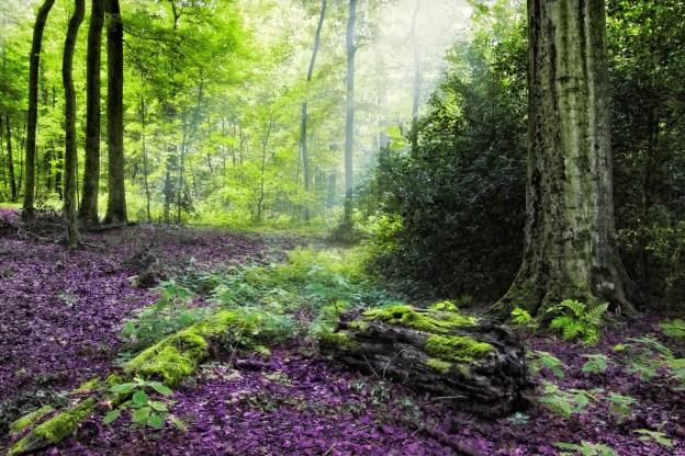 baume-herbst-wald-landschaft