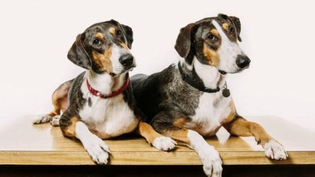 Clonación de mascotas
