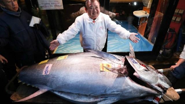 9 de enero de 2020, rey, del, atún