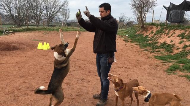 14 de enero 2020, Educador de perros, Perros, Animales, Persona, Hombre