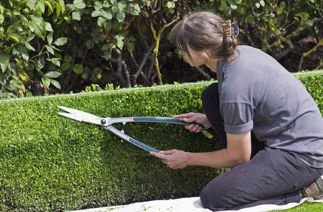 14 de enero 2020, Negocio de jardineria, Jardinera, Jardinería, Mujer, Persona, Trabajador, Negocio