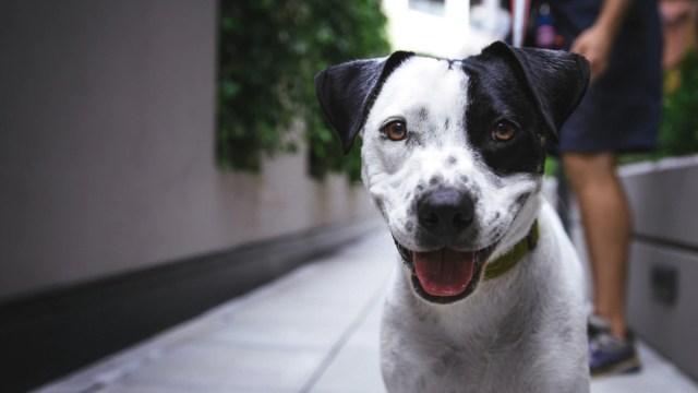 Crematorios para mascotas, Crematorios para animales CDMX
