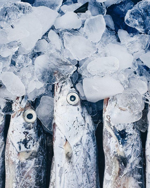 3 de marzo de 2020, venta de pescado (Imagen: Unsplash)
