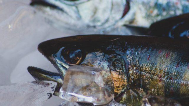 3 de marzo de 2020, pescado con hielo (Imagen: Unsplash)