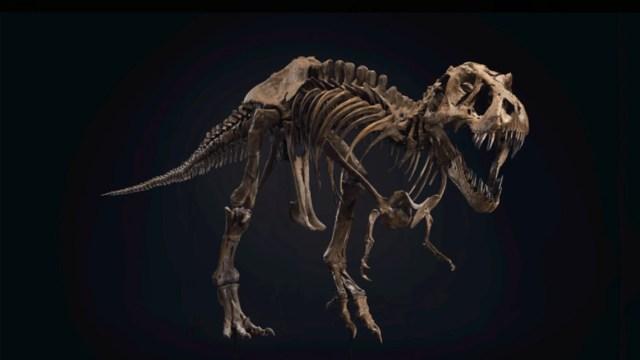 Subastan dinosaurio de T-Rex (Imagen: Christie's)