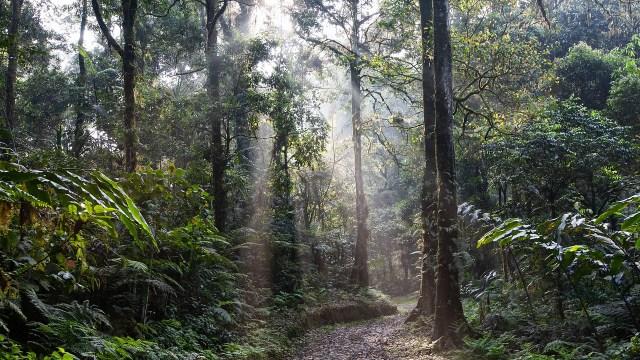 selva, ecosistema, t-mec, medio ambiente en México