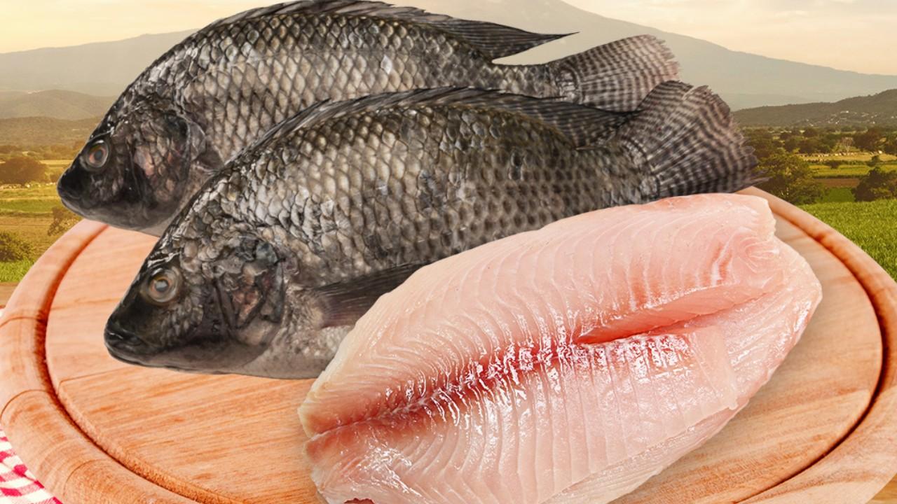 Mojarra tilapia el pescado más económico que puedes comprar ahora
