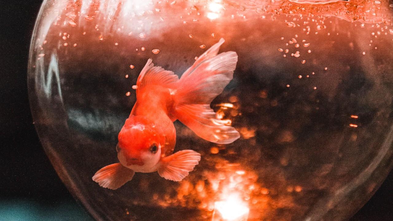 Comprar pecera para pez (Imagen: Unsplash)