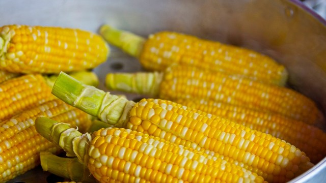 México prohíbe maíz transgénico: busca eliminar importaciones en 2024