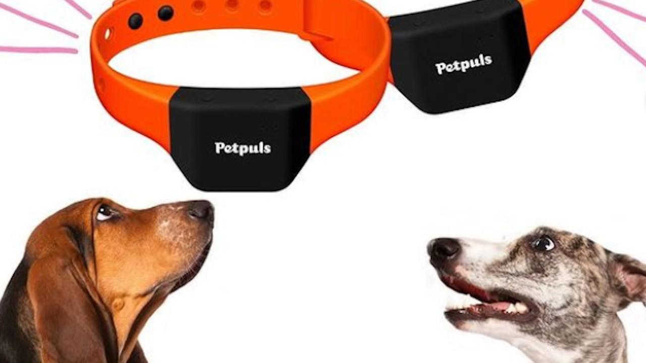 Collar para entender ladridos de perros (Imagen: instagram petpuls_us)