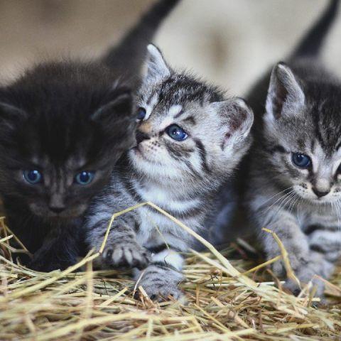 Cuánto cuesta y qué cubre un seguro para gatos según la Condusef