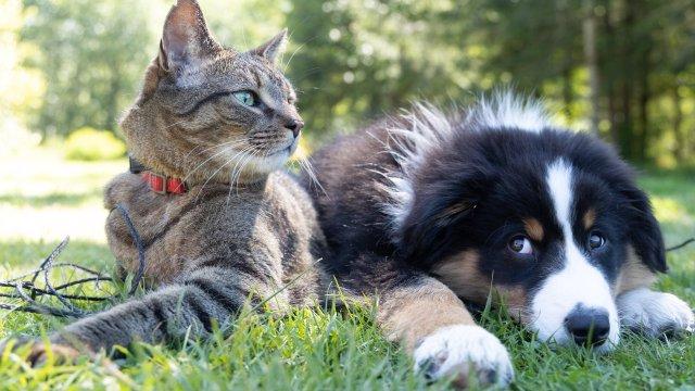 Sobres para mascotas ahorro