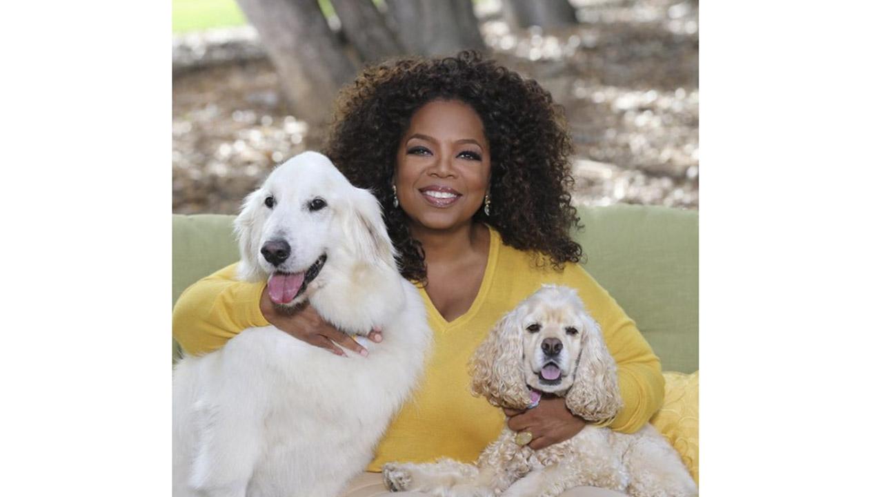 La presentadora ha garantizado el futuro de sus perros